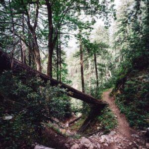 Trail-8km-Aiguilles trail SP
